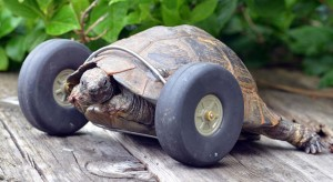 tortue-roues